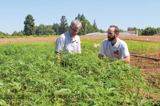 Jay Noller, left, director and lead researcher of the Oregon State University Global Hemp Innovation Center, and Lloyd Nackley, a hemp researcher, when the center launched. - OREGON STATE UNIVERSITY