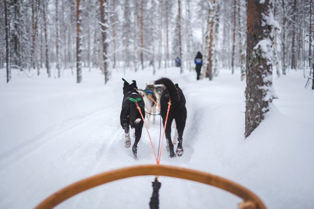 Race around Mt. Bachelor in style with your own sled dog crew. - UNSPLASH