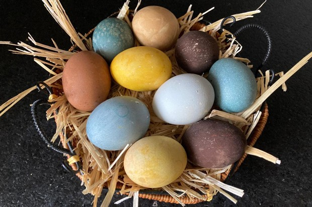 Tea-dyed eggs—especially ones that come from a diverse backyard flock—make a beautiful, muted palette. - ARI LEVAUX
