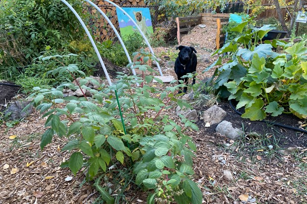 Building a cloche—like one that can go over the frame seen here at left—can help keep sensitive plants, like tomatoes, warmer during Central Oregon's short growing season. - NICOLE VULCAN