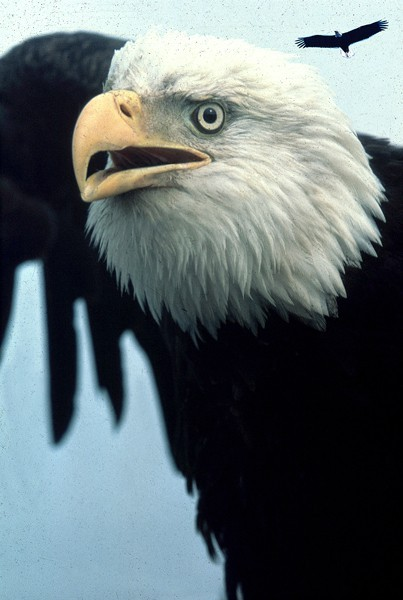 Eagles and raptors will be celebrated this weekend at the Round Butte Overlook.