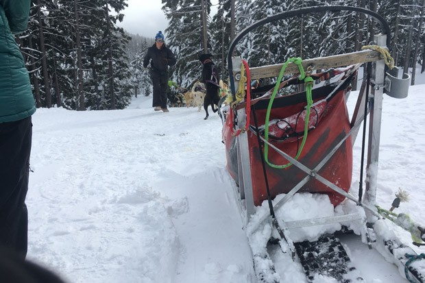 Well-cared-for sled dogs at Mt. Bachelor prepare to run their hearts out on the Trail of Dreams. - K.M. COLLINS