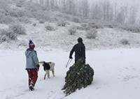 Dragging the tree out of the forest: just one part of this holiday tradition.