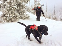 Avalanche Dogs to the Rescue