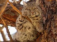 The Bobcat Business