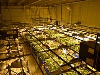 Deschutes County Files Appeals in Two Pot Farm Cases