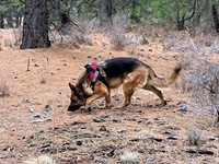 The Nose Knows: Working K-9s of Central Oregon