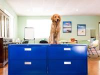 <b>Canine Colleagues</b>