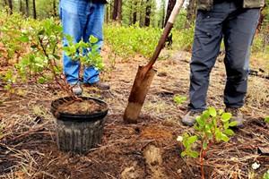 Transplanting Forest Seedlings Workshop & Field Trip
