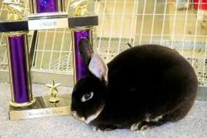 High Desert Hop Rabbit & Cavy Show