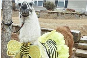Halloween Alpaca Your Wine Event!