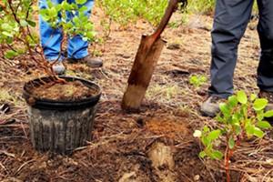 Transplanting Forest Seedlings Workshop