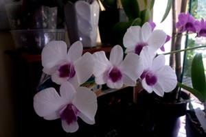 Orchid Basics and Repotting Demo Happy Hour Class