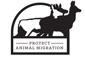 Protect Animal Migration