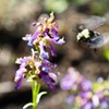 Birds, Bees and Wildflowers—Oh My!