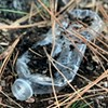 Wasted in Bend: Plastic Bottles