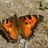 Butterflies, Butterflies and More Butterflies