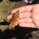 Butterfly perched on a hand - Uploaded by littlewolf