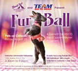 FurBall Spokespet on the Catwalk - Uploaded by Humane Society C.OR
