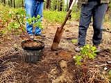 Forest Seedling Transplant Workshop - Uploaded by Amanda A