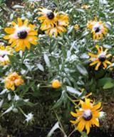 September snow in the Kansas Ave Learning Garden - Uploaded by Denise Rowcroft