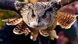 owl-2903707.jpg