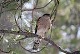 Join Sunriver Nature Center for their last bird walk of the season - Uploaded by Amanda A