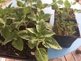 plants_for_sale.jpg
