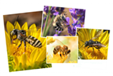 betwixt-the-bees-1536x1029.png