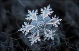 462eb945_snowflake.jpg