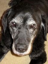Got Old Dog? - Uploaded by dogpacmember