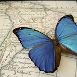 3bb60293_butterfly-on-map.jpg