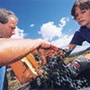 Albini Family Vineyards