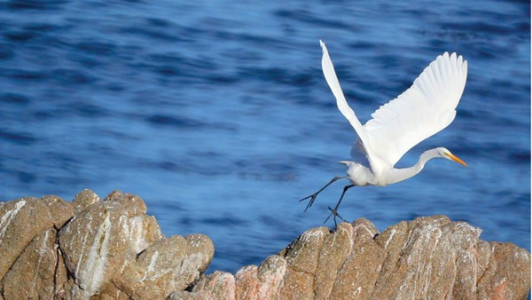 ASHORE John Harris' image-laden documentary spans Monterey to Big Sur.