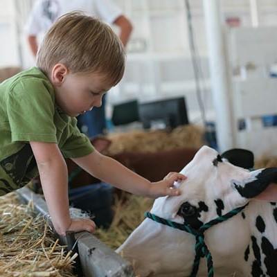 Sonoma County Fair 2012