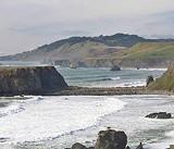 Beach Grouse