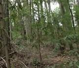 Bigfoot Sighting in Santa Rosa