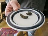 0825.eats.bugs.jpg