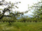 bb3d7dd9_apple_orchard.png