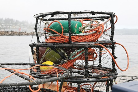 DUNGENESS AND DRAGONS A fishing-permit buyback program has had an as-yet-undetermined effect on the health 