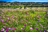 2883e7f2_napa-valley-wildflowers-and-grapevines-george-oze.jpg