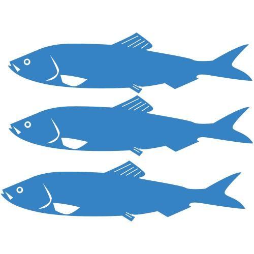 sausalito-herring-festival-84.jpeg