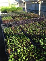 0c50cdcc_plants.png