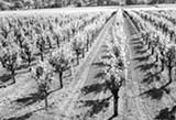 farmworkers-0222.jpg