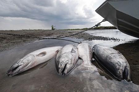 KING FISH  Recreational ocean salmon fishing kicked off on April 5.