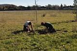 58117027_nathanson_tree_planting_sm.jpg