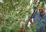 pot-farming-0616-1.jpg