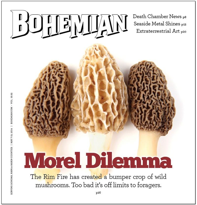 morel of the story features north bay bohemian