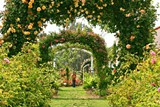 c5b969c8_garden_allee_400_x_600_mk_img_0501.jpg