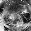 Mystery Seals